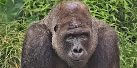 Breakfast with a Twist Series- Gorillas tickets