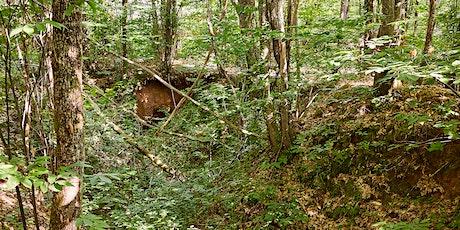 Menons l'enquête : à la recherche des habitants de la forêt billets