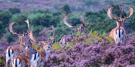 New Forest Wildlife Photography Trip tickets
