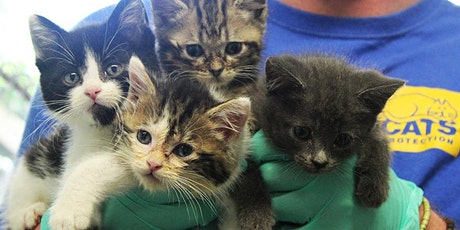 Girls Appeer Online Session - Cats Protection Virtual Workshop ( 7-12yrs) tickets