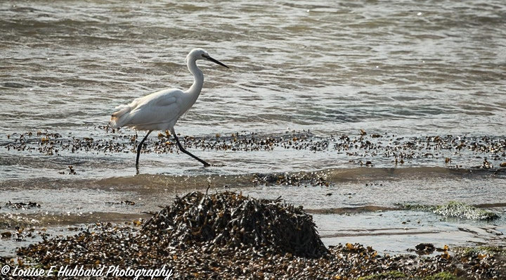 Landscape and Wildlife Photography Workshop - Hoo Marshes - 3rd June image