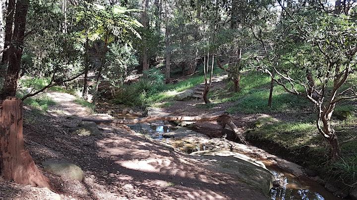 Parramatta Greens Clean Up Event image