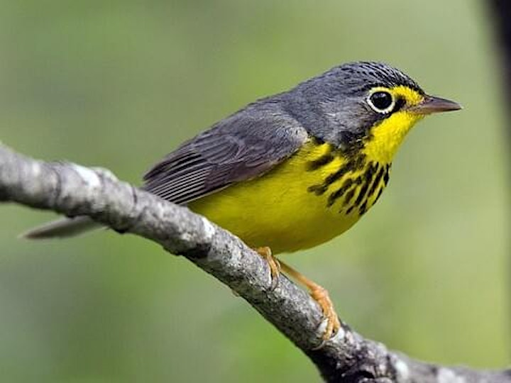 Bird Hike with Fred Dinkelbach (10am) image