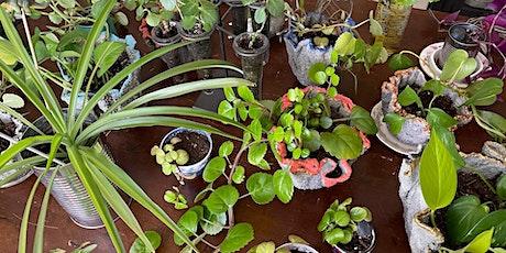 Plantstravaganza Pop-Up tickets