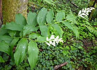Garden-Worthy Native Plants for the Pacific Northwest tickets