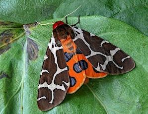 Moth Evening at Wheatfen tickets