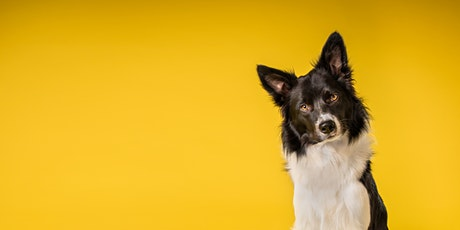 Pet series : Training Fundamentals tickets