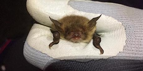Wheatfen Bat Evening tickets