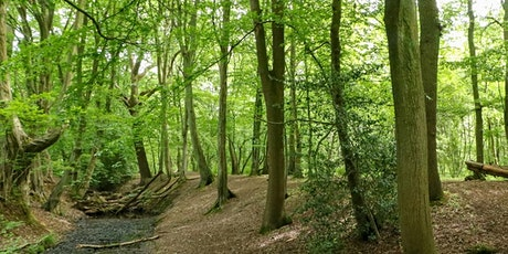 Morning Bird-spotting walk around Gobions Wood, Brookman's Park tickets