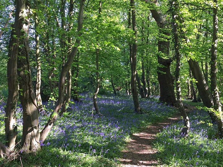 Morning Bird-spotting walk around Gobions Wood, Brookman's Park image