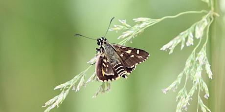Gardens for Wildlife Workshops - Sunbury tickets