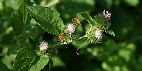 Native Plants and Gardening to Support the Biosphere tickets