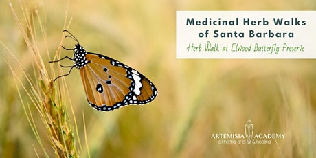 Medicinal Herb Walks of Santa Barbara - Elwood Bluffs & Butterfly Preserve tickets