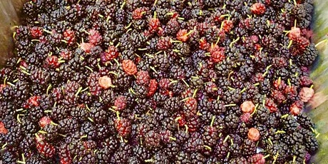 Foraging for Seasonal Berries and Strawberry Cultivation 101 tickets