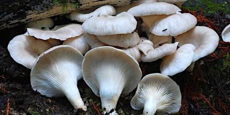 Mushroom Walk at The Willows at Brandow Point, Athens, NY tickets