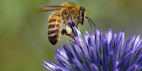 Bee Pollinator Walk at The Willows at Brandow Point, Athens, NY tickets