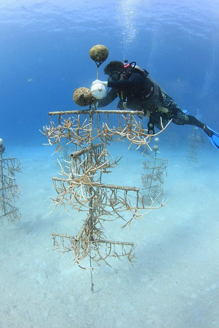 April Guest Speaker Giselle Deane: Nature Conservation in the Bahamas image
