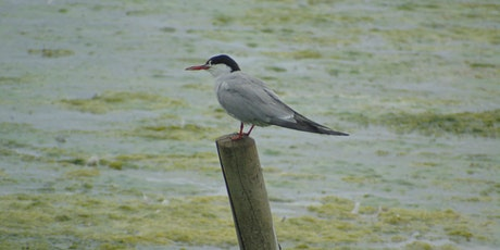 Morning walk around RSPB Rye Meads Nature Reserve tickets