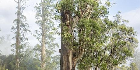 The Tasmanian Big Tree Hunters film + Q&A @ the Fern Tree Tavern tickets
