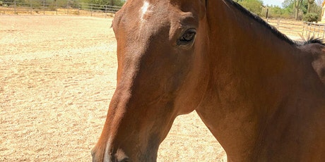 Learning Forgiveness Through Equine Coaching tickets