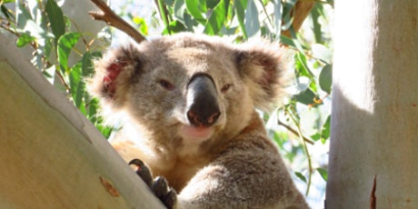 Wild Koala Day - Tree Planting Event tickets