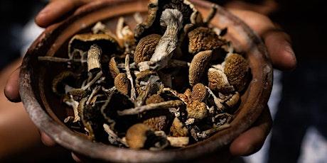 6-Night Sacred Mushroom Retreat in Costa Rica: Free Consultation tickets
