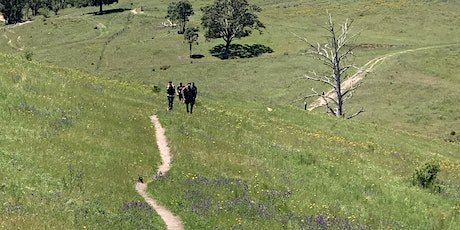 Nurtured by Nature  - May Walking Wellness Retreat -  Blue Mountains tickets
