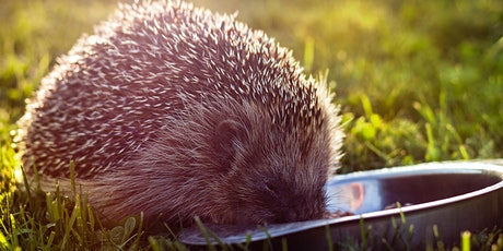 The Snuffle Trail Webinar with Prickles Hedgehog Rescue tickets