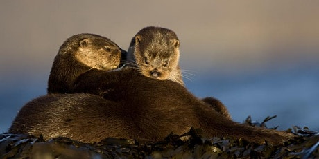 Living with Otters in the North East of England tickets