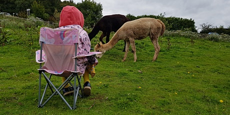 Alpaca Life Drawing - Holly Hagg Farm tickets