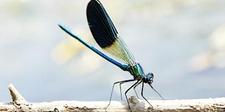 Libellules et papillons, ... une histoire d'ailes billets