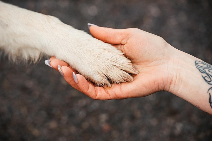 Animal Essential Touch Methode - Zertifizierungskurs: Bild