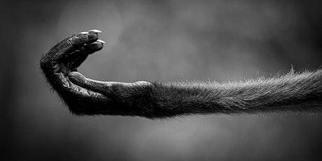 Photographing Wildlife Near and Far w/Nikon Ambassador Kristi Odem tickets