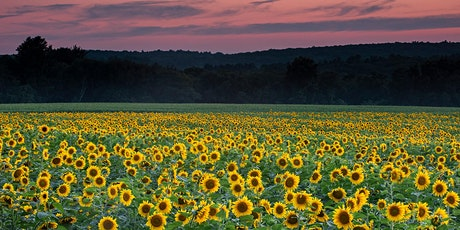 Sunflowers at Sunset tickets