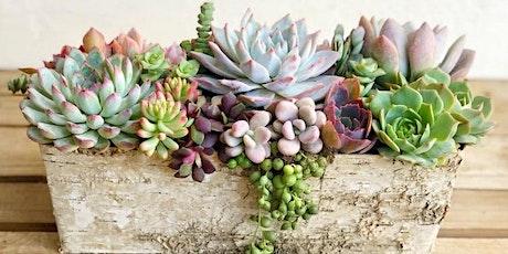 Mother's Day Create Your Own Succulent Arrangement Workshop tickets