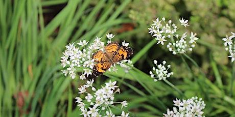 Gardening for Butterflies: Arboretum Adult Education tickets