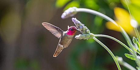 Gardening to Attract Hummingbirds tickets