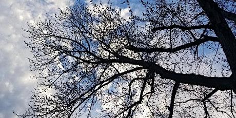 Oxon Run Parkway Tree Walk tickets