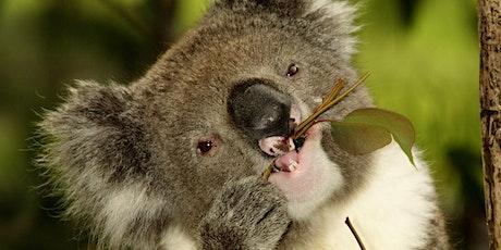 Koala Education Workshop tickets