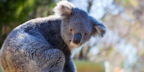 Koala Kids Workshop tickets