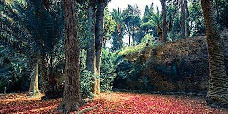 h 10.00 | Gli alberi rari dell'orto botanico biglietti