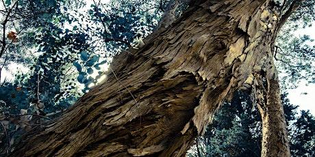 2 Gli alberi rari dell'orto botanico biglietti