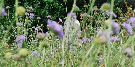 Learn to Identify & Record Wildflowers and Plants - Dartmouth tickets