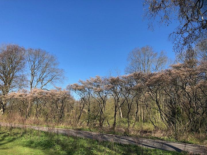 Afbeelding van Met bloeiende bloesems speed-wandelen in het Amsterdamse Bos