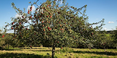 Traditional Orchards in Herefordshire - people, wildlife and culture tickets