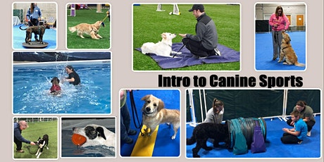 Intro To Canine Sports Workshop tickets