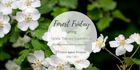 Forest Friday - Spring Woodland Wellbeing tickets
