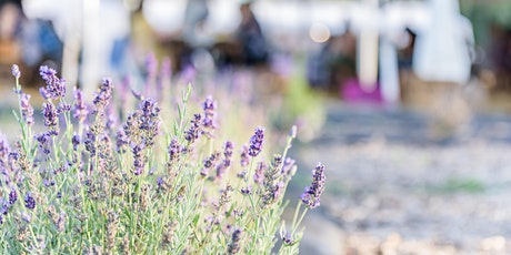 Worship Music in the Lavender Fields tickets