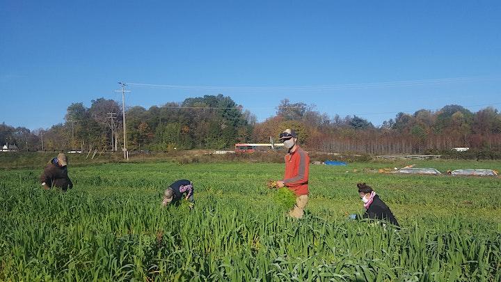 Arcadia Farm Volunteer (individual) image