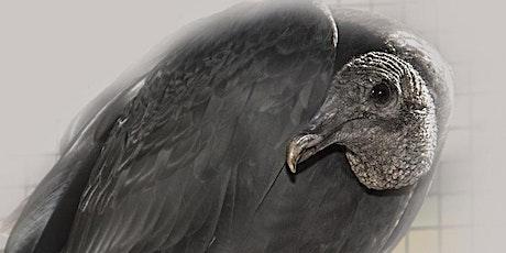 International Vulture Day Celebration tickets